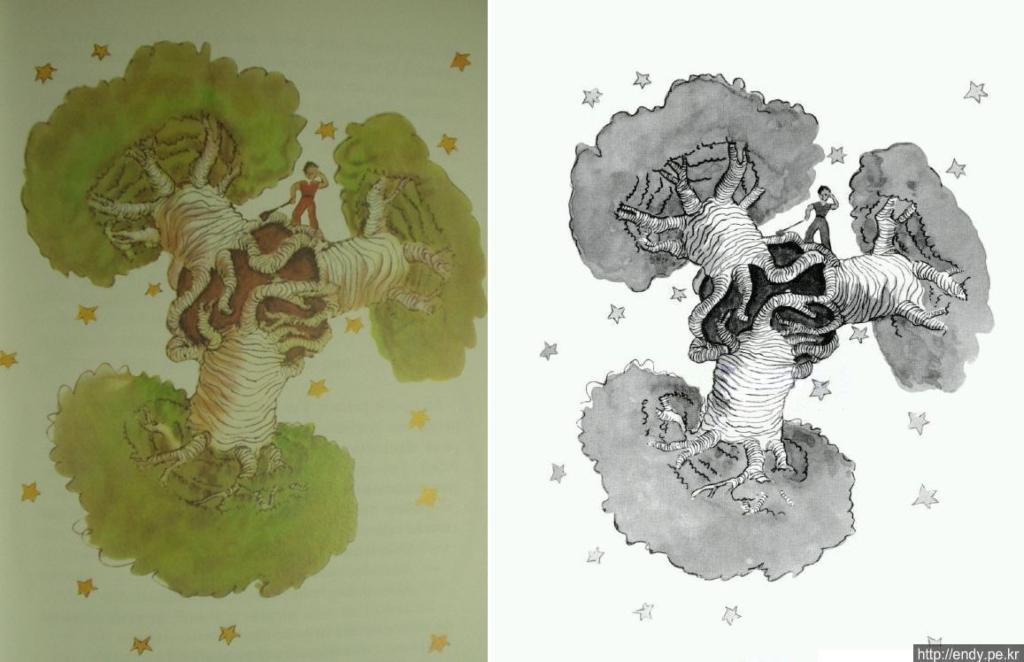"""""""바오밥나무"""""""