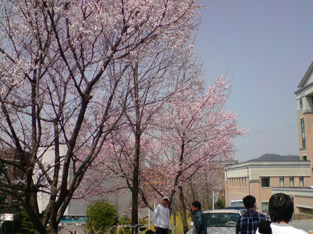 와 봄이다~~