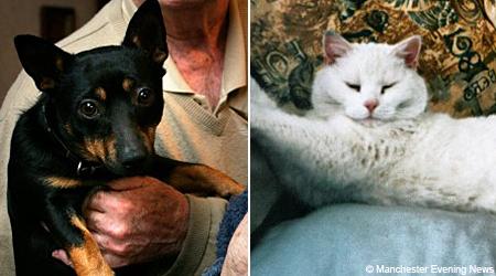 죽음을 초월한 개와 고양이의 우정
