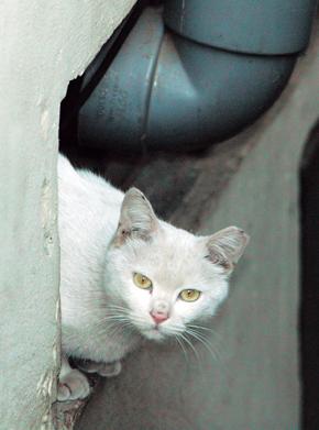 귀 잘린 고양이와의 행복한 동거