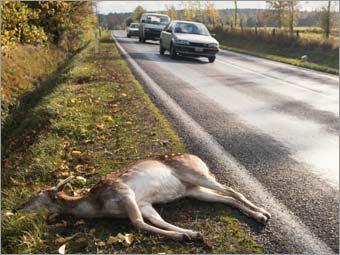 죽은 동물들의 사체를 수거하는 직업